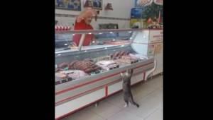 Bardzo uprzejmy sprzedawca prezentuje bezdomnemu kotu kawałki mięsa.