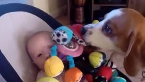 Pies ukradł dziecku zabawkę, potem poczuł się winny i przeprosił w niesamowity s