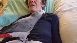Po 25 latach spędzonych razem papuga i jej właścicielka żegnają się pod koniec ż