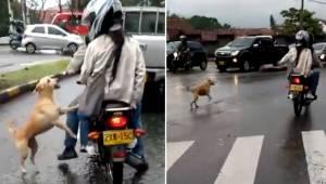 Pies biegnie za swoimi właścicielami, żeby go nie porzucali. Teraz to smutne nag
