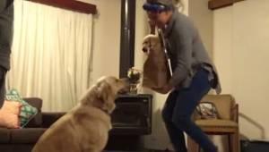 Właściciele zaskoczyli swojego starego psa dając mu malutkiego szczeniaka. Reakc