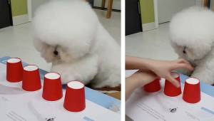 Najsprytniejszy pies w internecie wprawia w osłupienie wszystkich obserwujących.