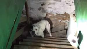 Mężczyzna kupił dom i znalazł w piwnicy psa przykutego do łańcucha. Reakcja zwie