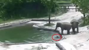 Dwa słonie biegną, by uratować małego słonika przed utonięciem, po tym jak wpadł