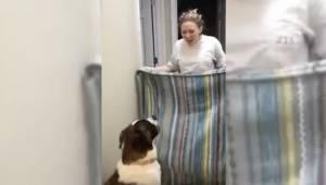 Kobieta chciała pokazać psu magiczną sztuczkę. Jedna jej pomyłka sprawiła, że ws