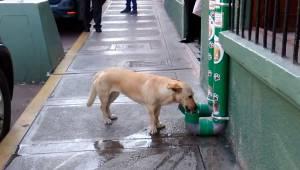 Policja stworzyła specjalne miejsce gdzie bezdomne psy mogą zjeść i się napić. D