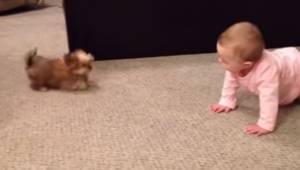 Tata nagrywa najbardziej uroczą rozmowę między szczeniakiem a niemowlakiem.