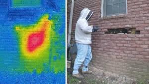 Właściciel domu usłyszał dziwny hałas przy ścianie, gdy usunął cegły natychmiast