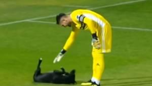 Pies wbiegł na boisko w trakcie meczu i nie chciał zejść dopóki bramkarz nie pog