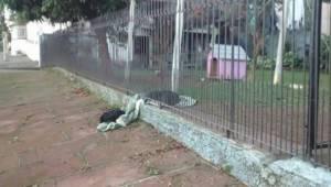 Bezdomny pies trafił do kochającej rodziny. Nagle coś zobaczył i dał właścicielo