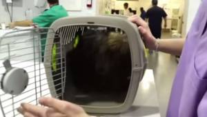 Pies był uwięziony  w małym pudełku przez całe życie. Zobaczcie co się dzieje gd