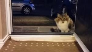 Bezdomny kot błaga by wejść do środka, wtedy mężczyzna odkrywa, że zwierzę nie j