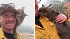 Kot nie chce opuścić strażaka, który go uratował z pożaru. Teraz nagranie porusz
