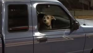 Pies nie widział swojego właściciela przez 10 dni. Jego reakcja gdy usłyszał jes