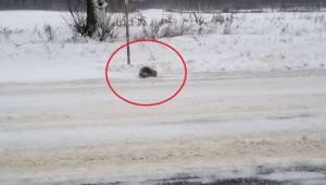 Kierowca zauważył zamarzniętą szarą kulkę na poboczu drogi, zatrzymał się i zauw