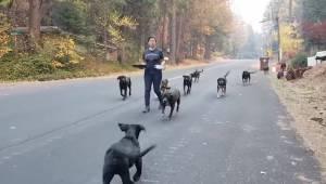 Te zwierzęta zostały uratowane z pożarów lasów w Kalifornii. Zobacz tylko ile em