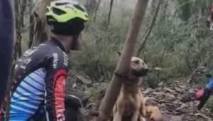 Ktoś zostawił psa przykutego do drzewa w lesie aby umarł z głodu i pragnienia.