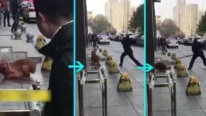 Policjant przez 3 godziny katował psa na ulicy, ponieważ nie chciał użyć środka