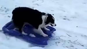 Pies zjeżdża z góry po śniegu, jednak to co robi na dole sprawiło że byłam pod w