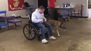 Ten pies miał zostać pomocnikiem osoby na wózki inwalidzkim, jednak to co zrobił