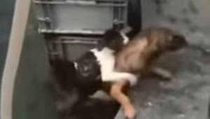 Wzajemna pomoc między zwierzętami: bohaterski pies pomaga kotu, który wpadł do w