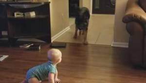 Dziecko raczkuje po podłodze, wtedy pies robi coś świetnego by je rozbawić. To t