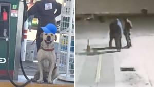 Bezdomny pies adoptowany przez pracowników stacji benzynowej uratował sytuację g