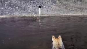 Jego pies zauważył kota w niebezpieczeństwie, nie wahał się ani chwili by go ura