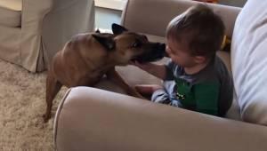 Dziecko siedzi i śmieje się na kanapie - wtedy podchodzi do niego pies, a ojciec