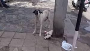 Suczka wyje i błaga o pomoc dla swojego chorego szczeniaka. Gdy zjawiają się lud