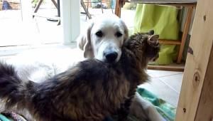 Zobacz tylko dwoje największych przyjaciół, psa oraz kotkę. Wszystko robią razem
