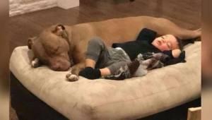 Mały chłopiec ma grypę i nikt nie jest w stanie go pocieszyć... oprócz uratowane