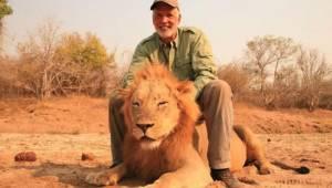 Łowca trofeów strzela do śpiącego lwa po czym świętuje patrząc na agonię umieraj