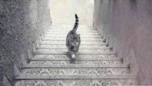 To zdjęcie powoduje gwałtowne dyskusje w Internecie: czy kot wchodzi czy schodzi