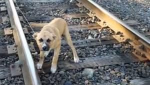 Szokujące: mężczyzna znalazł młodego psa przywiązanego do torów kolejowych!