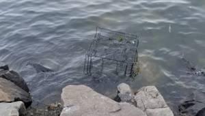 Pitbull był zamknięty w klatce i pozostawiony na pewną śmierć w morzu. Na szczęś