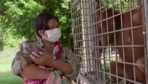 Samica orangutana dostaje z powrotem uprowadzone dziecko. Jej reakcja sprawia, ż