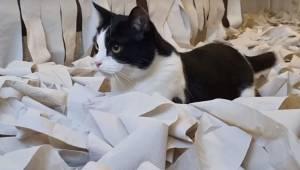 Postanowili zapełnić cały pokój papierem toaletowym, żeby ich kot mógł się pobaw
