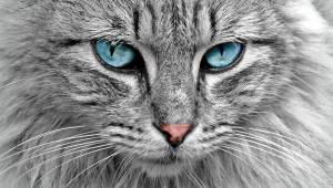 Naukowcy udowodnili, że koty odróżniają i rozumieją swoje imię. Nawet jeśli z pr