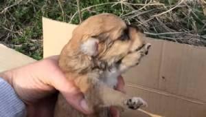 Wolontariusze znaleźli i uratowali dwa trzytygodniowe szczeniaki. Jak można wyrz