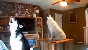 Nagranie z ukrytej kamery pokazuje jak te 3 psy zachowują się gdy zostają same w