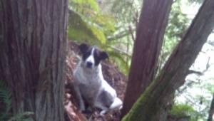 Właściciel zginął w lesie więc ta suczka postanowiła pozostać przy nim dopóki ni