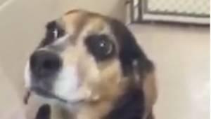 Kobieta przywiozła psa do schroniska i poprosiła by lekarz go uśpił. Powód rozwś