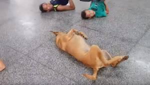 Dzieci wykonują ćwiczenie na podłodze podczas nauki tańca, wtedy dołączył do nic