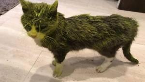 Załamana właścicielka opisuje jak nieznani sprawcy oblali jej kotkę farbą, niest