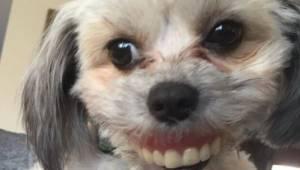 Starszy pan zgubił protezę, gdy zajrzał pod stół zobaczył, że jego pies ma całki