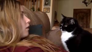 Kot domaga się głaskania w najsłodszy możliwy sposób! To jest najbardziej urocze
