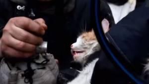 Gdy strażacy znaleźli tego kota w płonącym mieszkaniu, nie dawał oznak życia. Wt