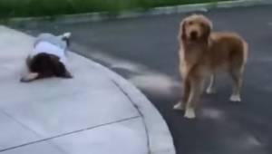 Ratownicy podchodzą do rannej kobiety, wtedy jej pies robi coś co wzrusza do łez