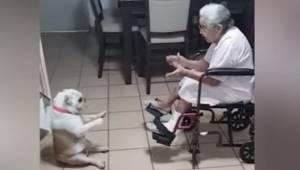 Starsza pani zaczyna klaskać, a wtedy jej pies robi coś naprawdę uroczego!